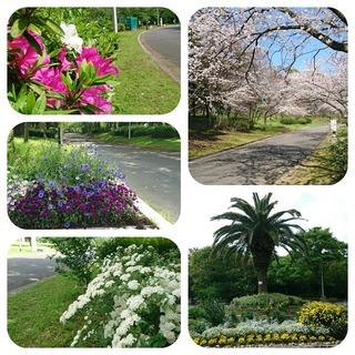 大泉緑地(花).jpg